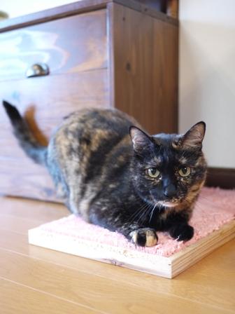 猫のお留守番 ワサビちゃん天ちゃんう京くん編。_a0143140_222841.jpg
