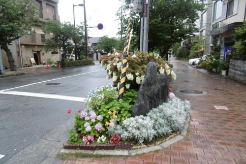 梅雨時はアジサイ通り_f0205367_17331088.jpg