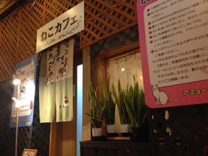 会津初の猫カフェOPEN!アミューズパーク会津店に行ってきました^^ by ぐるっと会津_d0250986_13183164.jpg
