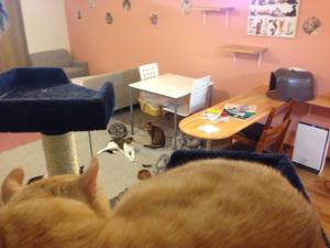 会津初の猫カフェOPEN!アミューズパーク会津店に行ってきました^^ by ぐるっと会津_d0250986_13191988.jpg