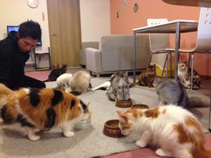 会津初の猫カフェOPEN!アミューズパーク会津店に行ってきました^^ by ぐるっと会津_d0250986_13211796.jpg