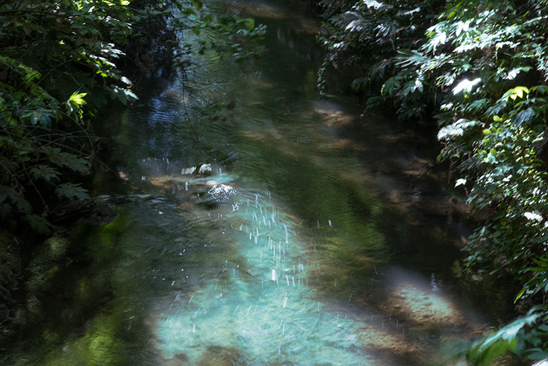 新記憶の残像-2 東京都立川市 玉川上水_f0215695_18163389.jpg
