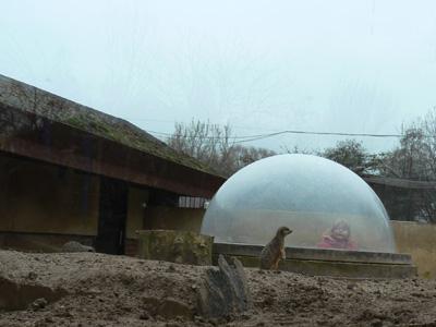 冬のLondon Zoo_e0338157_15253419.jpg