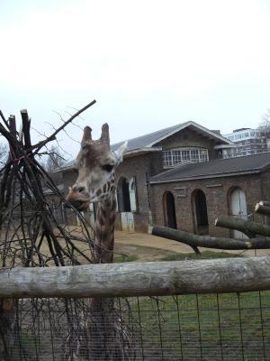 冬のLondon Zoo_e0338157_15253459.jpg