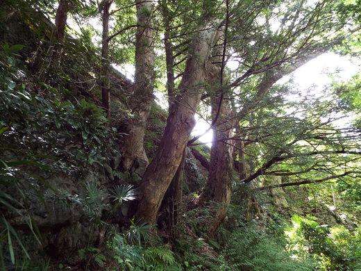 6月10日猿橋と岩殿山の下見_e0145782_18562947.jpg