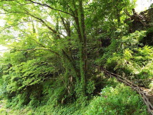 6月10日猿橋と岩殿山の下見_e0145782_18565999.jpg