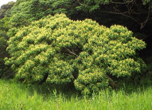6月11日 小網代の森見て歩き_e0145782_19104813.jpg