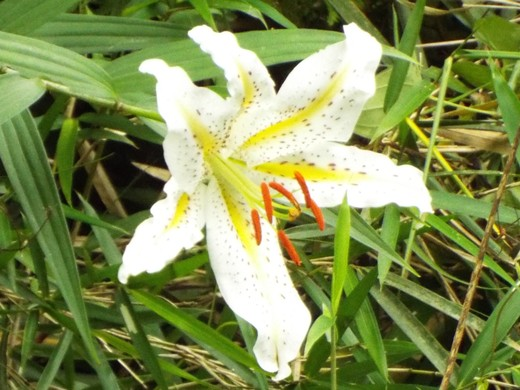 6月11日 小網代の森見て歩き_e0145782_19163735.jpg