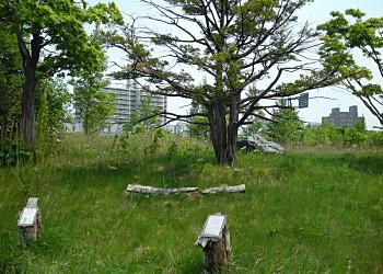 市民地質巡検「札幌の洪水跡を訪ねて」(3)_f0078286_10125649.jpg