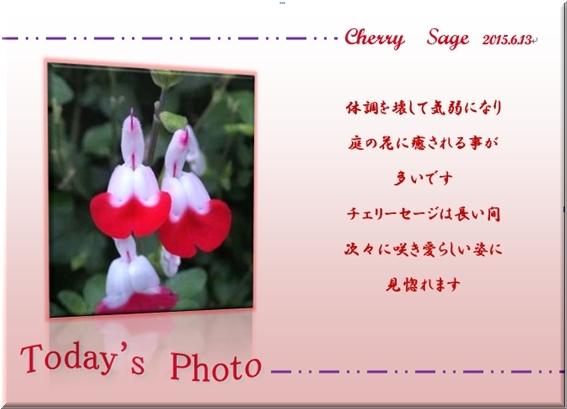 f0345156_16542119.jpg