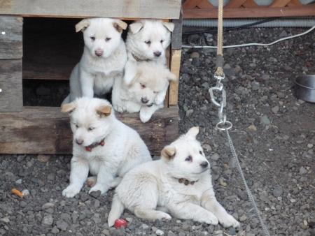 ココが5匹の子供を産みました。_a0160770_18345913.jpg