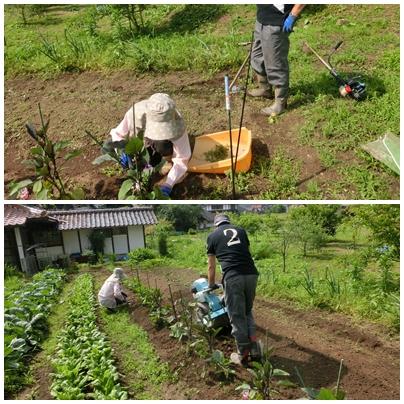 草刈り隊集合日_a0199979_20542529.jpg