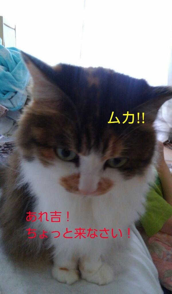 c0181639_01043976.jpg