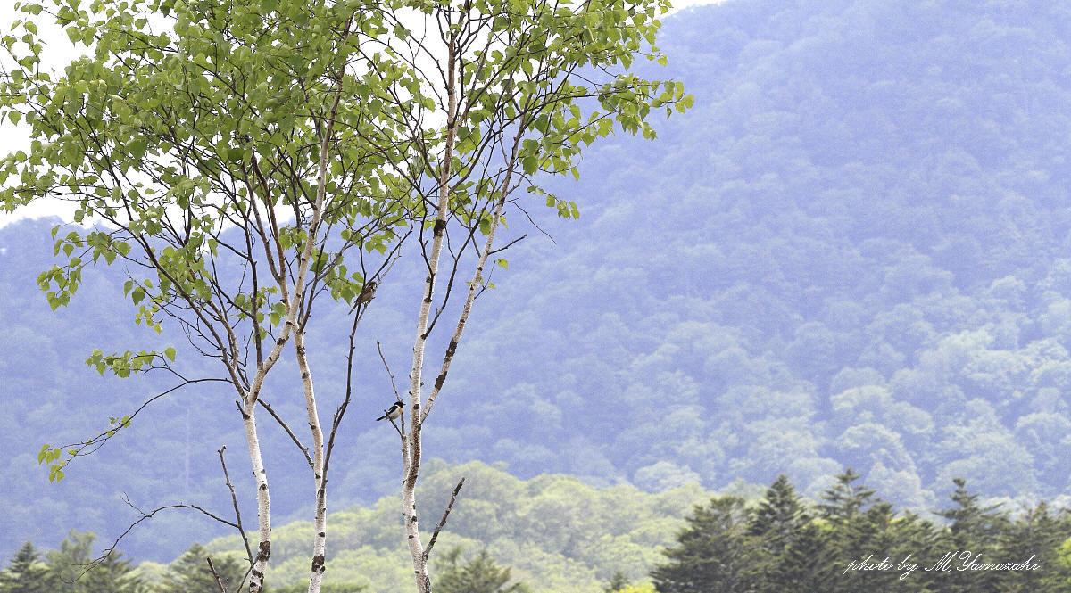 山の風景_c0217255_13544182.jpg