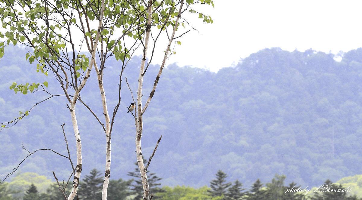 山の風景_c0217255_13544980.jpg