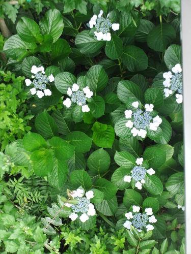 雨に咲く花_f0253572_13200881.jpg