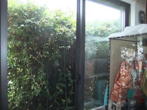 雨に咲く花_f0253572_13265923.jpg