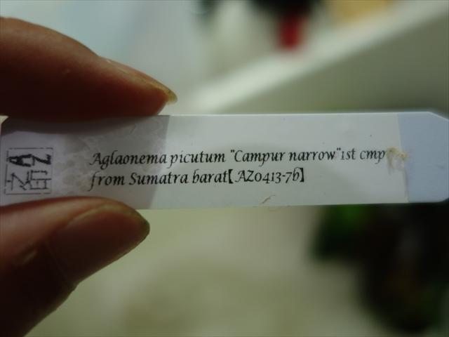 a0067578_656598.jpg