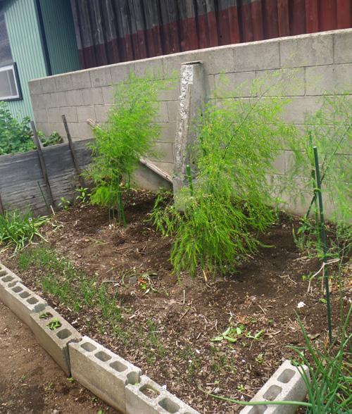 ミニミニ菜園の手入れと、小さくて長い草取り鎌のことなど♪_a0136293_18373981.jpg