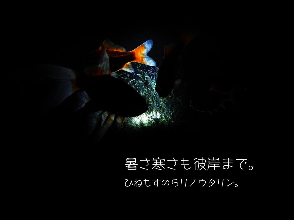 b0182613_07080586.jpg