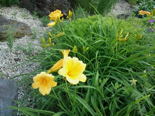 ロックガーデンの花々7_b0219993_17421830.jpg