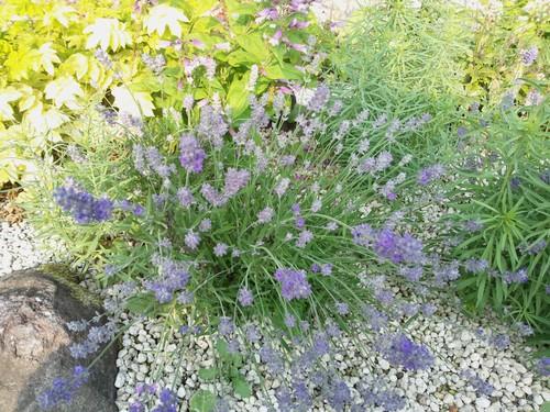 ロックガーデンの花々7_b0219993_17424682.jpg