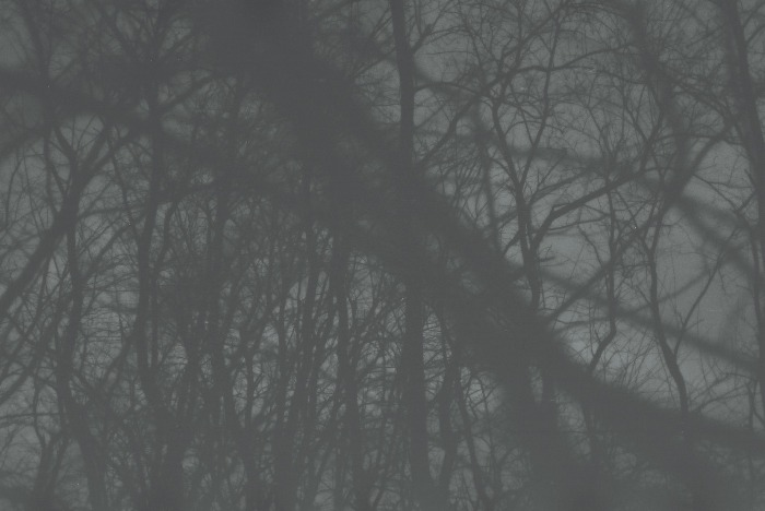 a0214096_212280.jpg