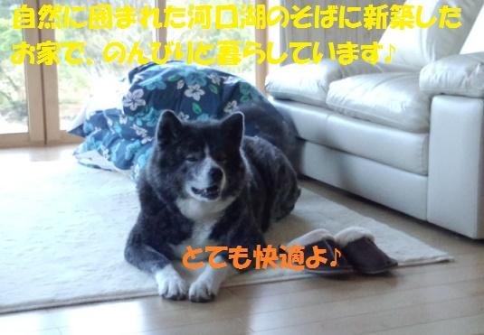 f0121712_14404636.jpg