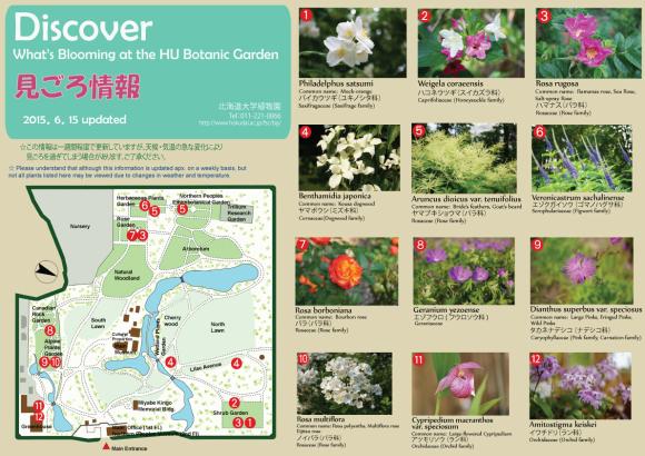 Facebookから北大植物園へ_c0025115_20143391.jpg