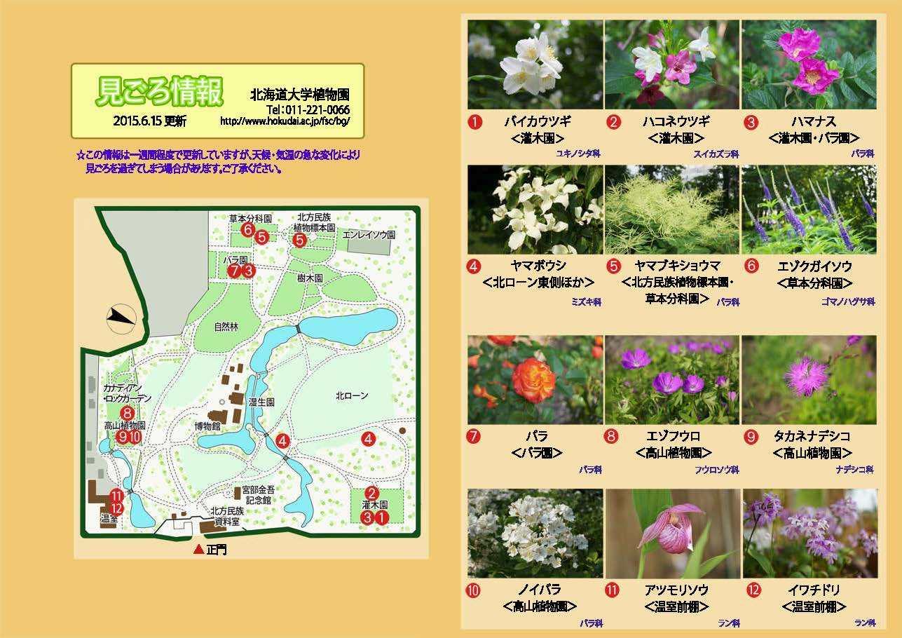 Facebookから北大植物園へ_c0025115_20155264.jpg
