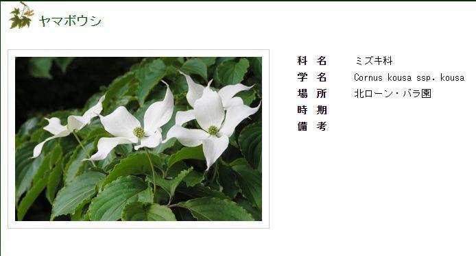 Facebookから北大植物園へ_c0025115_20222526.jpg