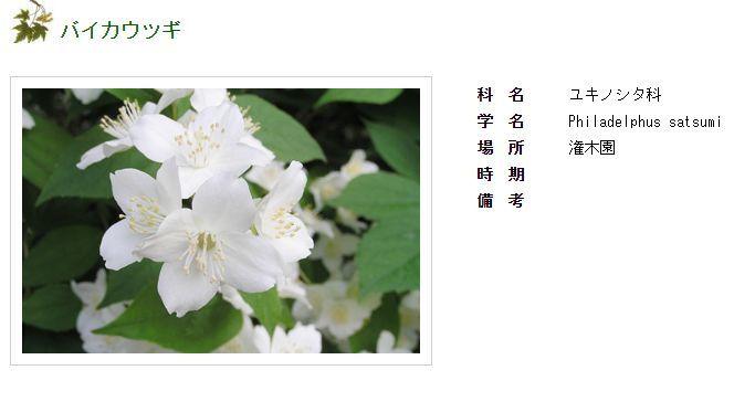 Facebookから北大植物園へ_c0025115_20222760.jpg