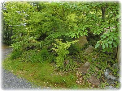 自然の流れに乗せた庭_f0045132_8523061.jpg