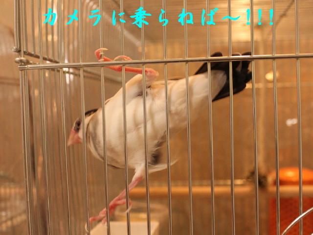 c0365734_20460615.jpg
