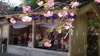 2015年 倶利迦羅さん八重桜まつり_c0208355_16483886.jpg