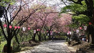 2015年 倶利迦羅さん八重桜まつり_c0208355_16491338.jpg