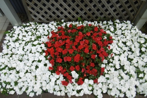 日の丸花壇_f0205367_17052271.jpg