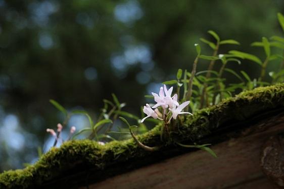 庭に生えるとやっかいだが_e0304170_18254888.jpg