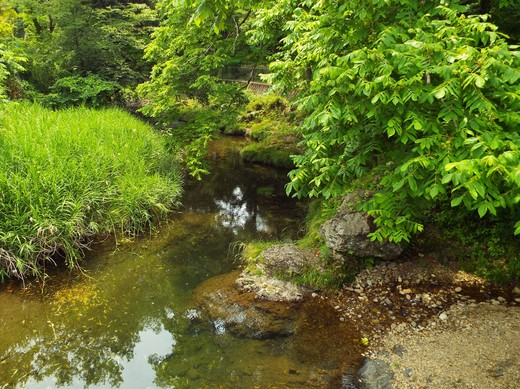 6月15日 高尾・南浅川の滝_e0145782_12463818.jpg