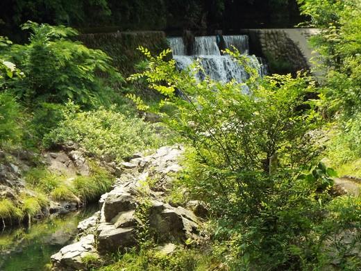 6月15日 高尾・南浅川の滝_e0145782_1331288.jpg