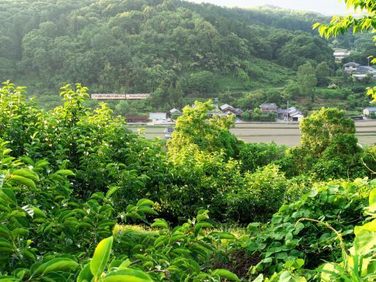 山沿いを行く和歌山線_f0266284_00100221.jpg