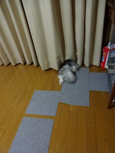 掃除機大好き♡&あっついね~_c0178104_07590229.jpg
