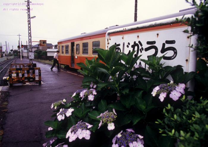 終着駅のガクアジサイ_d0309612_22344863.jpg