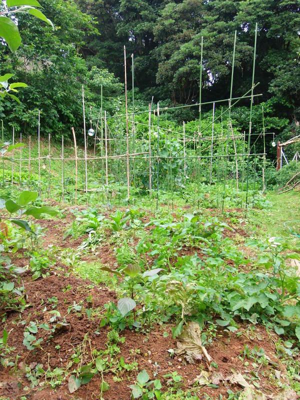 定休日の「農作業」で。_a0125419_09594133.jpg