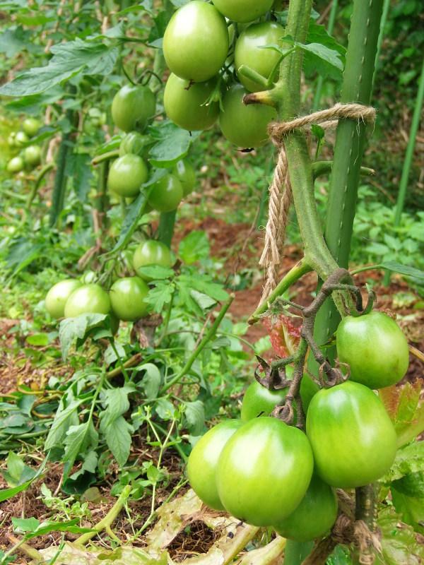 定休日の「農作業」で。_a0125419_10114455.jpg