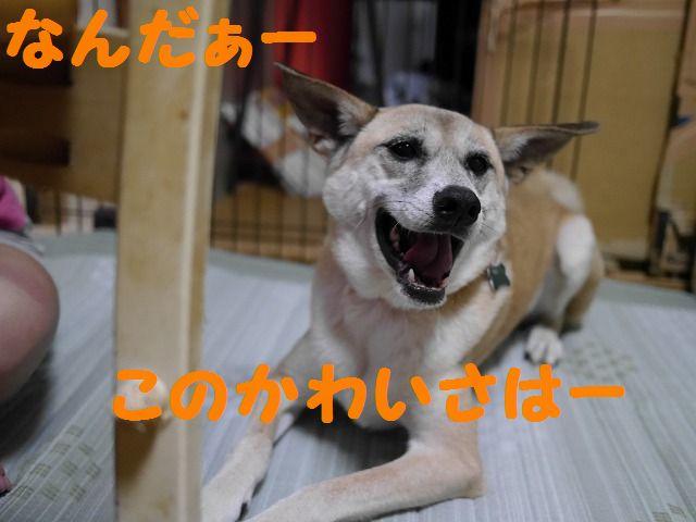 f0282319_325991.jpg