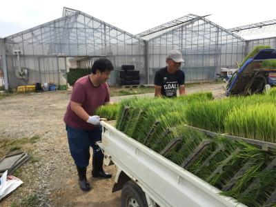 かがみいし田んぼアート 田植祭りの前に農作業だ!_e0140921_22204040.jpg