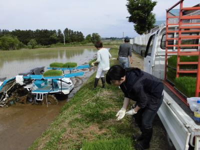 かがみいし田んぼアート 田植祭りの前に農作業だ!_e0140921_2222413.jpg
