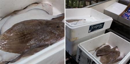 イギリスの高級魚、ドーバー・ソール_b0199526_20111595.jpg