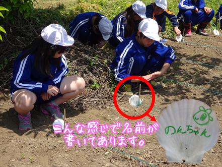 大豆苗植え体験なのだ♪_c0259934_15033567.png